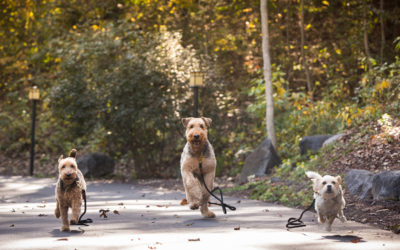 How to Make Your Daily Dog Walk Happier–for You and Your Dog